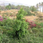 Beit_Yerakh_Mound_תל_בית_ירח_-_panoramio